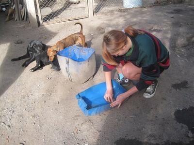 Une volontaire aide à l'entretien du refuge pour chiens lors de son chantier en soins animaliers en Argentine.