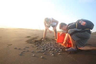 Les bébés tortues sont relâchés dans l'océan par les volontaires au Mexique