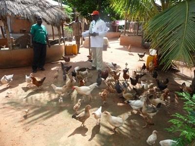 Mission dans l'agriculture communautaire au Togo