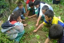 Missions de volontariat et stages en Argentine : Agriculture communautaire