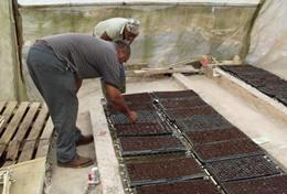 Missions de volontariat et stages en Jamaïque : Agriculture communautaire