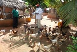 Agriculture communautaire : Togo