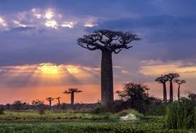 Etre volontaire à Madagascar avec Projects Abroad : Écovolontariat &  Environnement