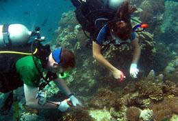 Chantiers écovolontariat et environnement : Thaïlande