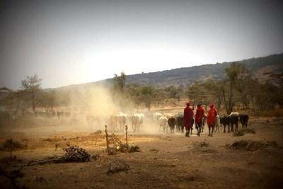 Immersion culturelle chez les Massaï