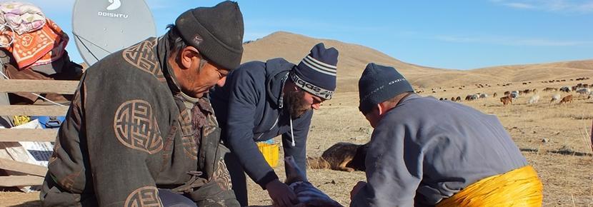 Un volontaire participe à notre projet nomades en Mongolie