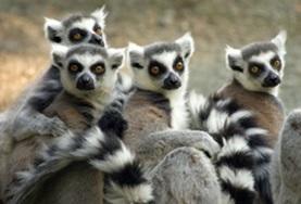 Écovolontariat & environnement : Madagascar