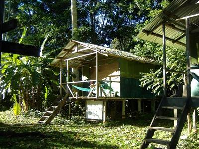 (Aucune suggestion) en jungle d'Amazonie