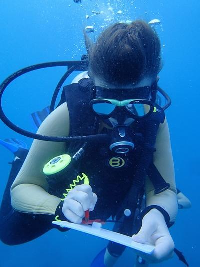 Volontaire aux Fidji recensant des données sous l'eau