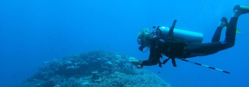 Protection de l'environnement lors d'une mission en écovolontariat aux Fidji