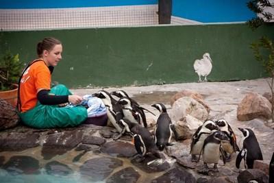 Mission animaux en Afrique du Sud