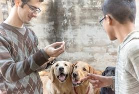 Etre volontaire au Belize avec Projects Abroad : Médecine vétérinaire &   soins animaliers