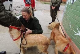Missions de volontariat et stages en Bolivie : Médecine vétérinaire &   soins animaliers
