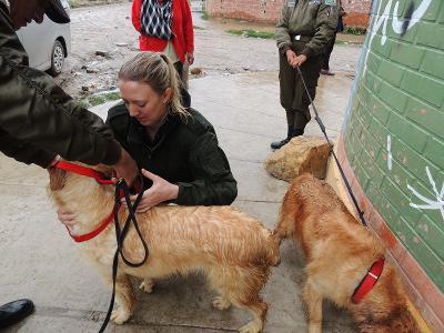 Stage médecine vétérinaire en Bolivie