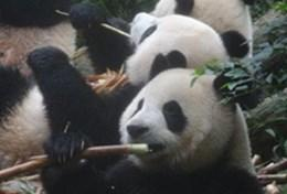 Stages et missions de volontariat en Chine : Médecine vétérinaire &   soins animaliers