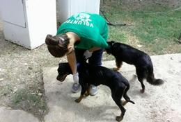 Mission humanitaire auprès d'animaux:médecine vétérinaire et soins animaliers : Jamaïque