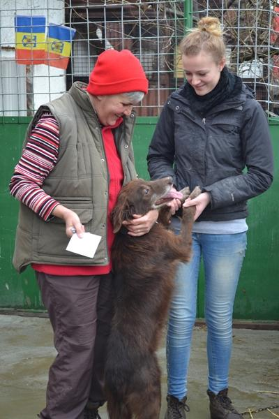 Volontaire dans le refuge pour chiens abandonnés