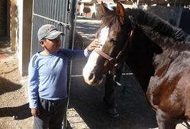 Mission de volontariat auprès d'animaux:médecine vétérinaire et soins animaliers : Bolivie