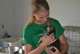 Missions de volontariat et stages aux Samoa, en Polynésie : Médecine vétérinaire   & soins animaliers