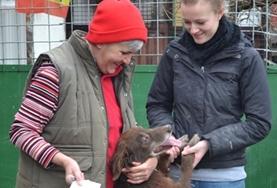 Mission de volontariat auprès d'animaux:médecine vétérinaire et soins animaliers : Roumanie