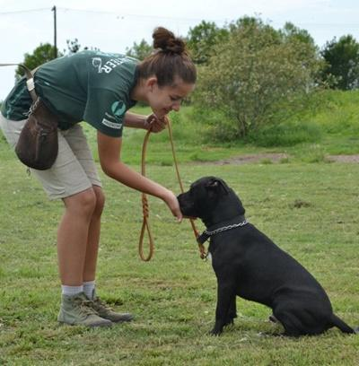 Une volontaire en médecine vétérinaire dresse un chien dans un refuge en Argentine