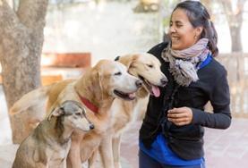Missions de volontariat et stages en Argentine : Médecine vétérinaire