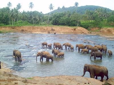 Action humanitaire au Sri Lanka